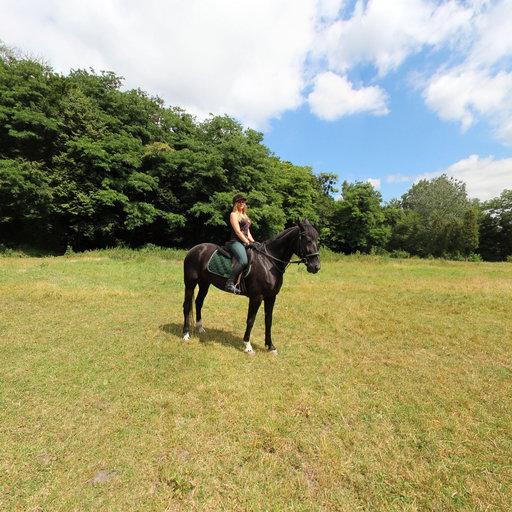 marybrodsky-ridingschool_08